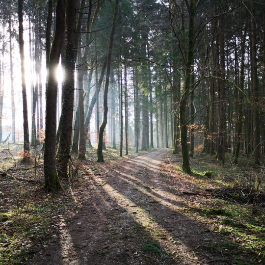Moier Hof Wald 540x540 - Impressionen