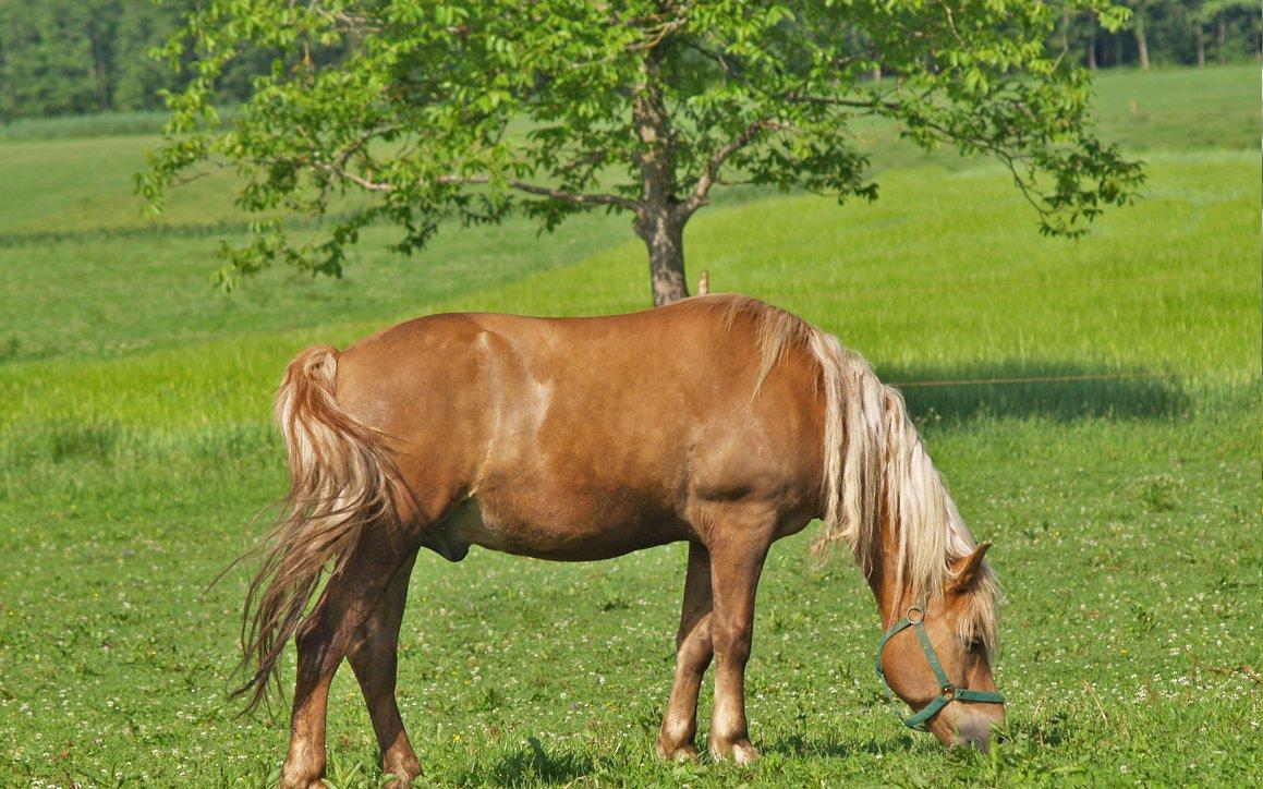Pferd - Unser Hof