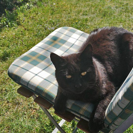 Katze auf Liegestuhl 540x540 - Impressionen
