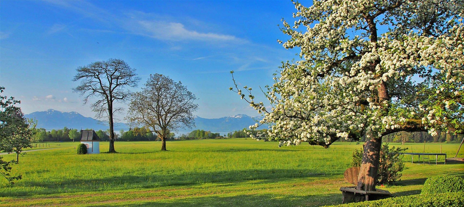 Apfelbaum See - Moier-Hof Lex